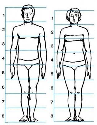 Деление роста человека на восемь равных частей