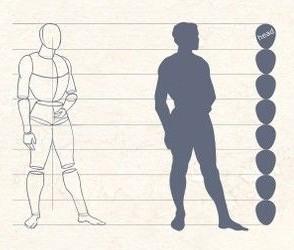 Длина головы примерно равна одной восьмой от роста человека